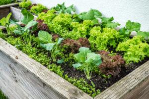 hochbeet anlegen der leitfaden zur bef llung und bepflanzung. Black Bedroom Furniture Sets. Home Design Ideas